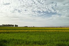 Cloudy  farmland. In  Qinghai of CHINA Stock Photography