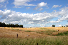 Cloudy Field. A cloudy field on a summer day Royalty Free Stock Photography
