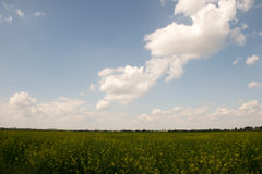 Cloudy field landscape Royalty Free Stock Photography