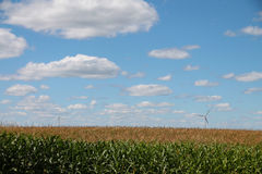 Cloudy Filled Blue Sky with Windmills and Cornfield Royalty Free Stock Images