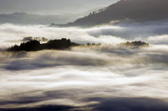 Cloudy forest Royalty Free Stock Image