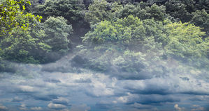 Cloudy forest Royalty Free Stock Photo