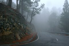 Cloudy forest on La Palma Stock Photos