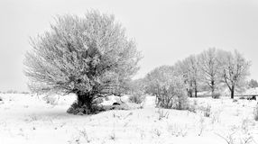 Cloudy frosty winter day Royalty Free Stock Photos