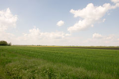 Cloudy grain field landacape Royalty Free Stock Images