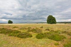 Cloudy heath landscape at Hoge Veluwe national parc, the Netherlands Royalty Free Stock Photos