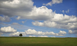 Cloudy horizont. Alone tree on cloudy horizont Stock Photography