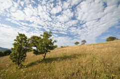 Cloudy landscape. Summer landscape with cloudy sky Stock Photo
