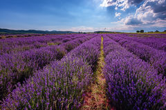 Cloudy landscape with lavender in the summer at the end of June. Contrasting colors, beautiful clouds, dramatic sky. stock photography