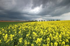 Cloudy landscape with rape Stock Images