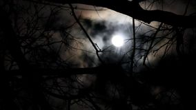 Cloudy moon behind trees on a windy night stock video