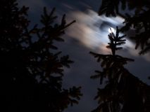 Cloudy moonlit night over spruce forest. Trees royalty free stock images