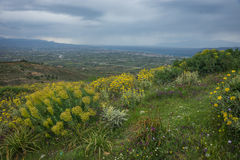 Cloudy mountain landscape with yellow flowers Stock Photo