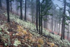 Cloudy mountain wood Royalty Free Stock Photo