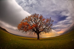 Cloudy night on field in spring Royalty Free Stock Photo