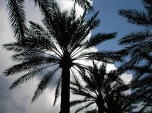 Cloudy Palm Trees Stock Photo