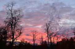 Cloudy pink and purple sky at sunset with bare trees Royalty Free Stock Photos