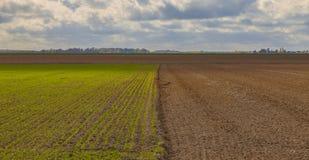 Cloudy Plain Landscape in Autumn Stock Photos
