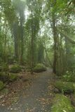 Cloudy rainforest. Stock Images