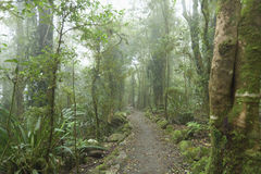 Cloudy rainforest. Mossy, cloudy path in Australian rainforest Royalty Free Stock Photography