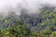 Cloudy rainforest Stock Image