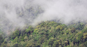 Cloudy rainforest - Series 2 Stock Photography