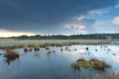 Cloudy rainy sky reflected in swamp water Royalty Free Stock Photos