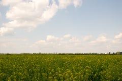 Cloudy rape field landacape Stock Photos