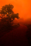 Cloudy Red Evening. A mysterious old path during an evening with orange light and clouds touching the ground Royalty Free Stock Photos