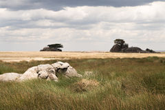 Cloudy Serengeti Plains Royalty Free Stock Photography