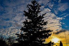 Cloudy Silhouetted Sunset. The sun sets over a tree in MI, giving the tree a silhouette effect and highlighting the cloud formations royalty free stock photography