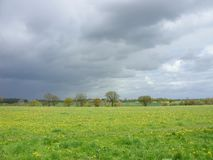 Stormy skies - bad weather a-coming. Think that the wildflowers are going to get some water soon. Field with flowers, trees and overhead a very dramatic sky royalty free stock photography