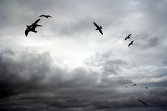Cloudy skies in Whitby. Black and white, clouds, seagulls Royalty Free Stock Photography