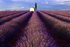 Cloudy skiy above a picturesque stone built skack in Lavender Field Stock Photo