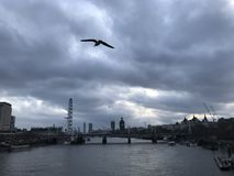 Cloudy Sky with bird flying over London City River Thames with Landmarks in the background. Landscape of London City / Town looking over the River Thames with a stock photography