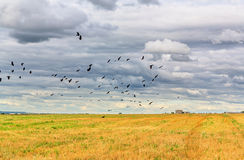 Cloudy sky and black birds Royalty Free Stock Photography