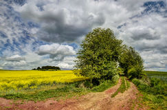Cloudy sky. Dirt road leading to the fields under a cloudy sky Royalty Free Stock Photography
