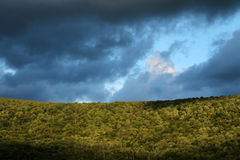 Cloudy sky in the forest. A view of a cloudy sky through the trees in the Catskills Royalty Free Stock Photography