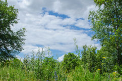 Cloudy sky framed by green nature. A nice natural frame formed by trees and plants around the cloudy sky Stock Photos