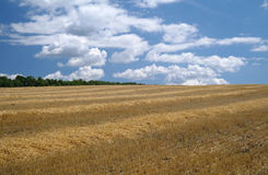 Cloudy sky and golden field . Stock Photography