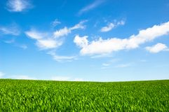 Cloudy sky and grass Stock Image