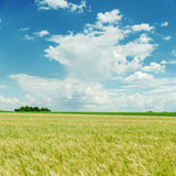 Cloudy sky and green field Royalty Free Stock Photo