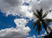 Cloudy sky before the heavy rain Stock Image