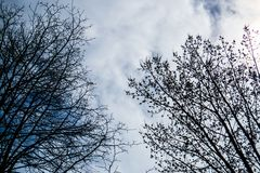 Cloudy sky and leafless spring trees. The Province of Quebec, Canada royalty free stock photos
