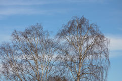 Cloudy sky and almost leafless trees. On a sunny day at the spring beginning stock photography