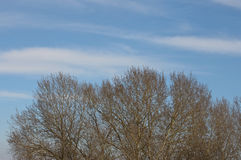 Cloudy sky and almost leafless trees. On a sunny day at the spring beginning stock photos