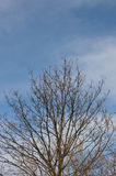 Cloudy sky and almost leafless trees. On a sunny day at the spring beginning royalty free stock photography