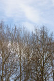 Cloudy sky and almost leafless trees. On a sunny day at the spring beginning stock photo
