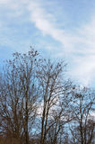 Cloudy sky and almost leafless trees. On a sunny day at the spring beginning royalty free stock image