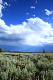 Cloudy sky with meadow. Scenic view over a wild meadow stock photo